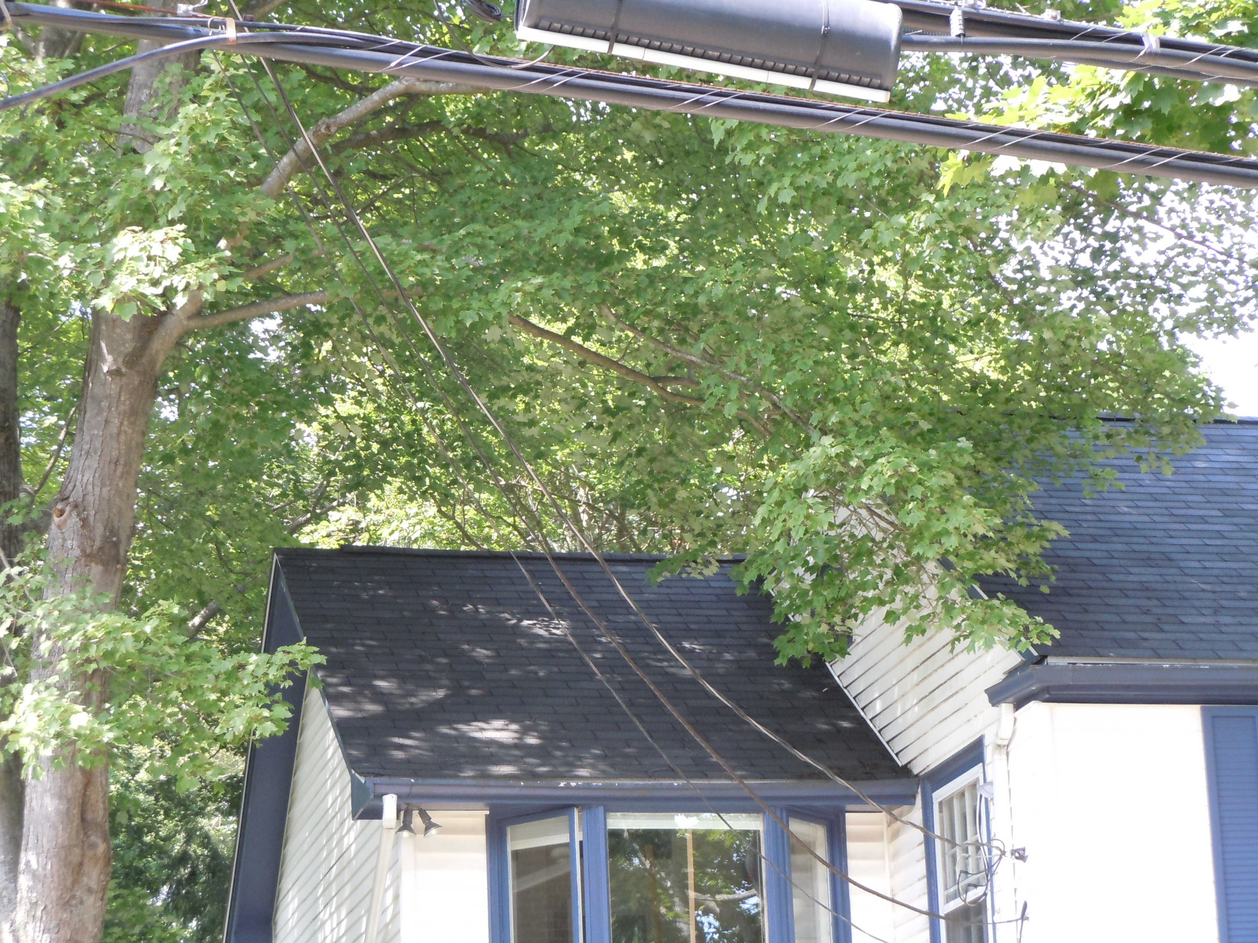 Branches Touching House Solid Tree Care